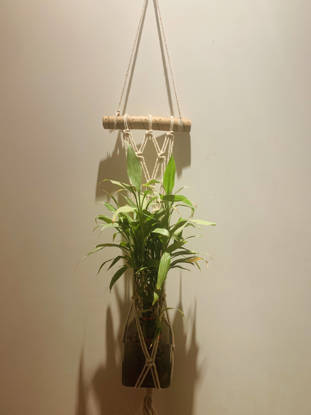 Picture of Macrame Plant hanger with wooden support and matt design
